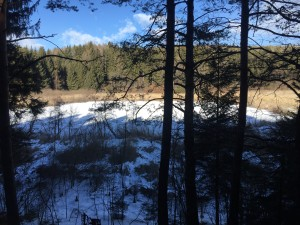 laghestel-inverno